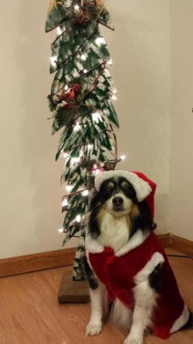 Santa Sassy