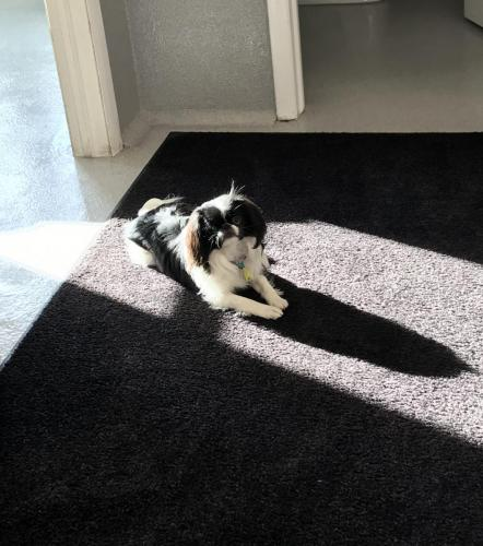 Paisley enjoying the sun coming through the windows.