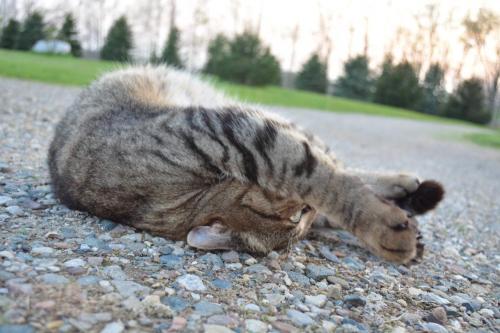 Living dangerously - Cat yoga
