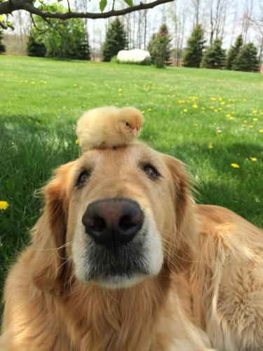 """""""There's a pecking order, you know..."""" - Chick #1"""