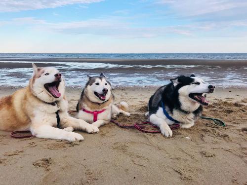 Beach pups